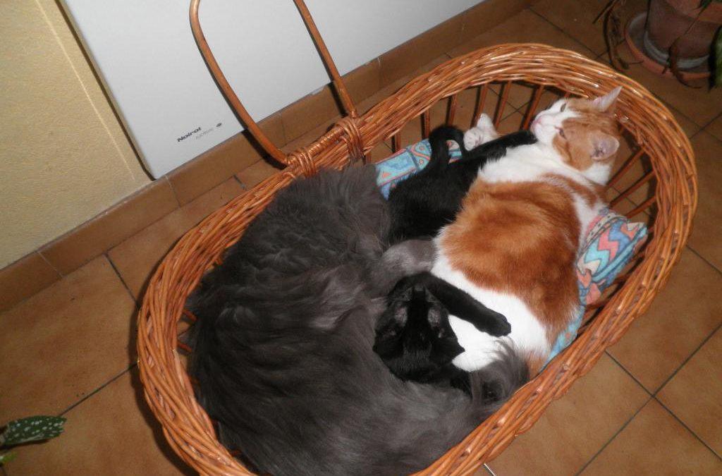 Quand les gros chats jouent les nounous !
