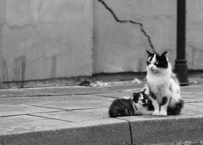 Chats errants – une avancée dans la législation