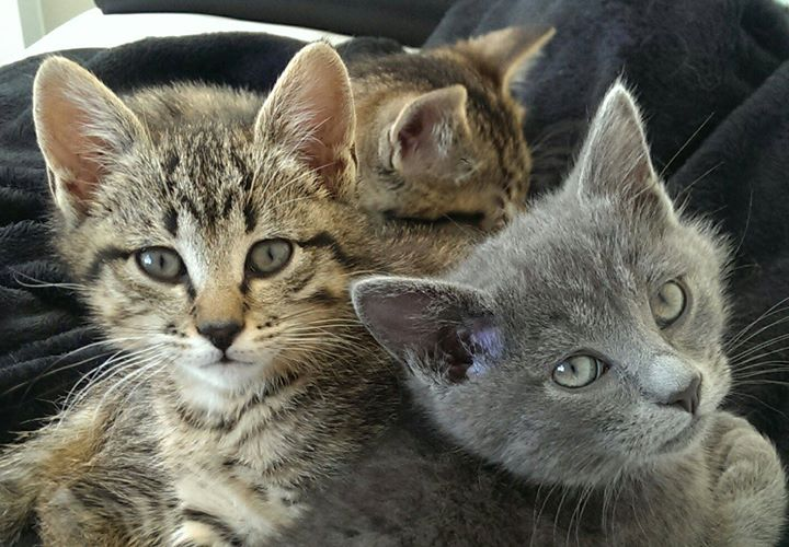 Nos chatons à l'adoption