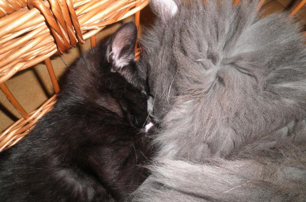 Grelot et son chaton