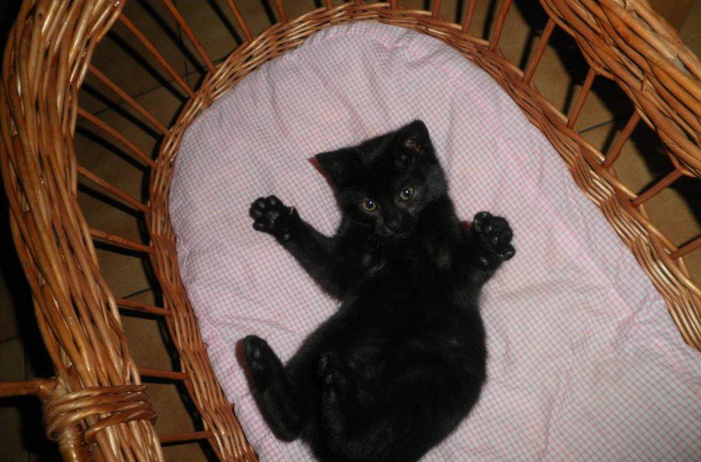 Le premier chaton sorti de la rue : Bella