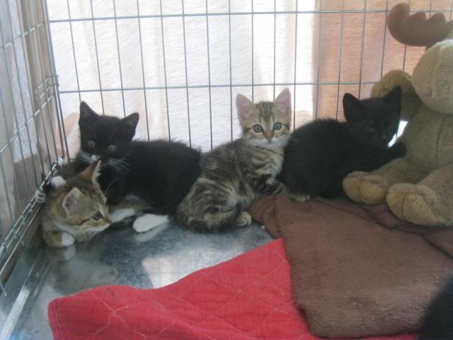 5 chatons de la rue