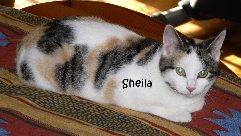 Sheila adoptée