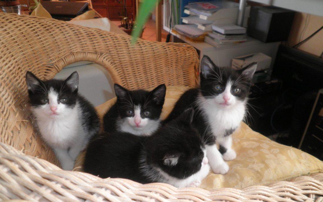 Ils ont été adoptés !