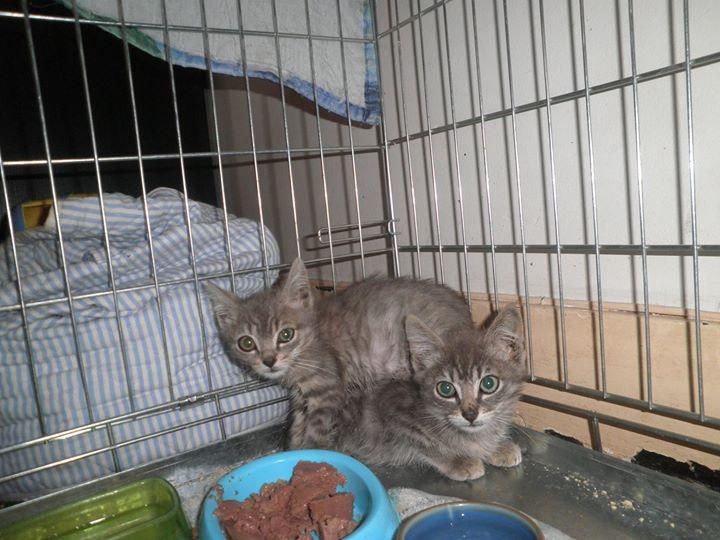 Deux des bébés de Zola en lieu sûr !