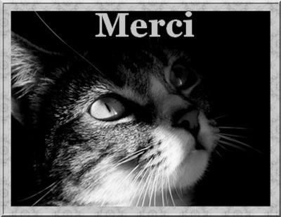 Des nouvelles des chats de Pont l'Abbé-D'arnoult