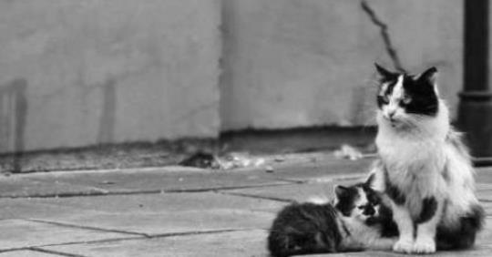 Pétition pour les chats de Pont l'Abbé-d'Arnoult