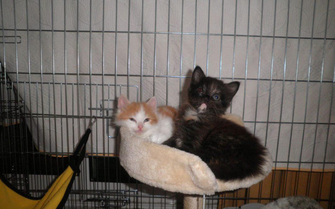 Tootie et Frooty