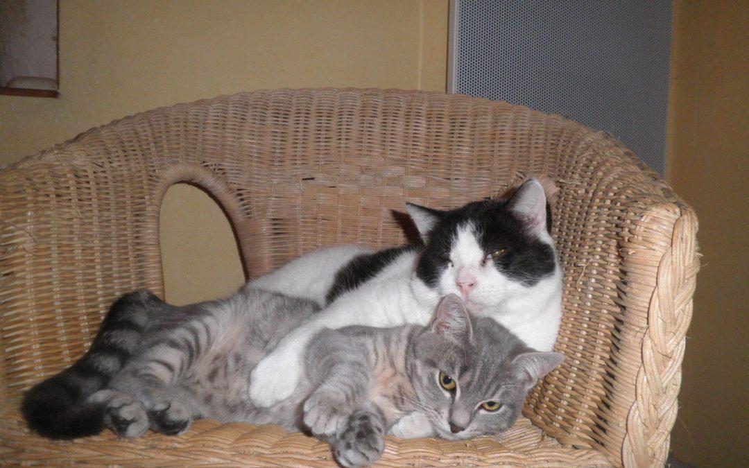 Nos chats au parrainage