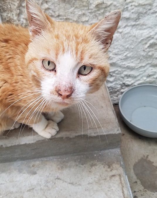 SOS pour un chat en détresse – (Edit du 19/06 il a été adopté)