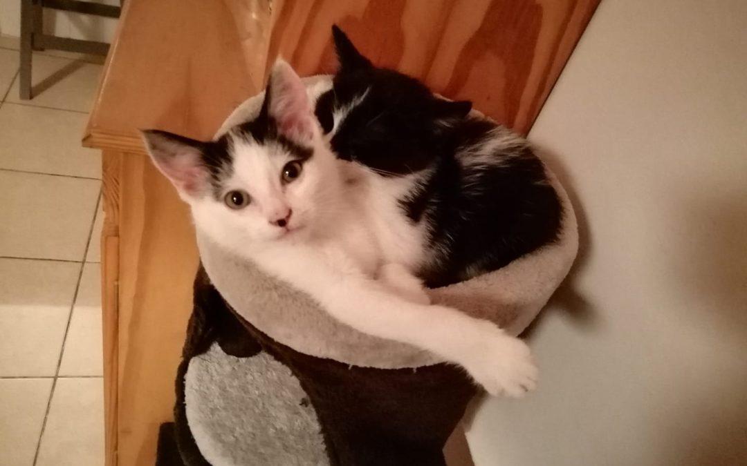 Pixie et Pépino