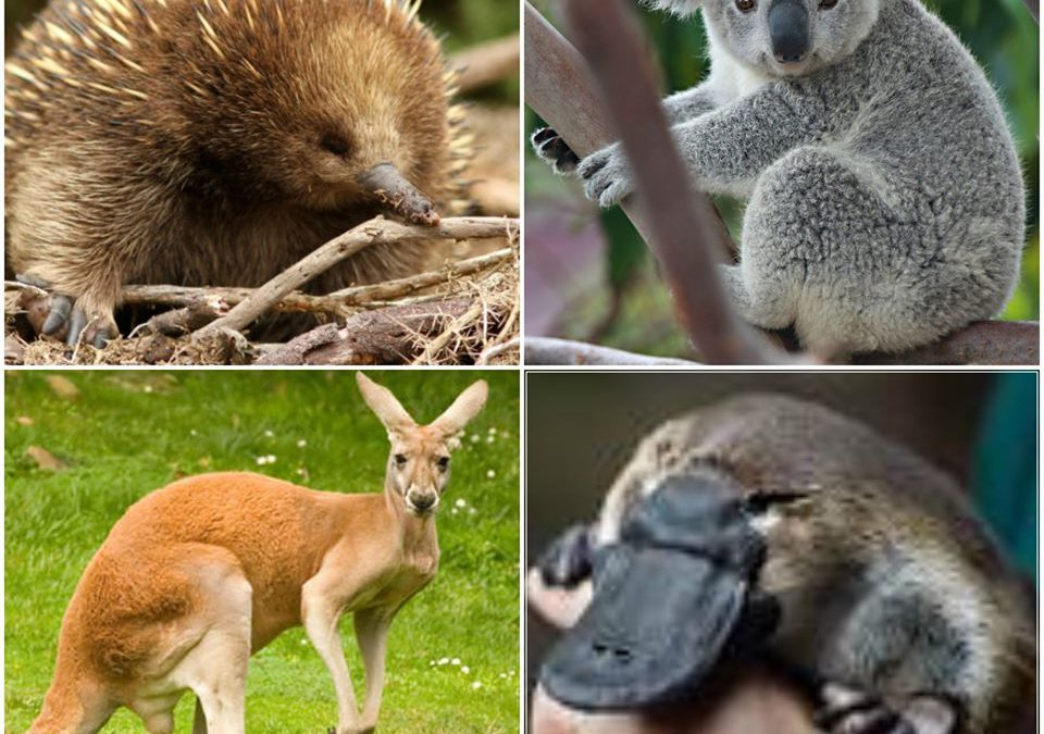 Soutenir l'Australie