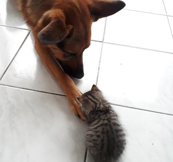 Ils s'entendent comme chiens et chats !